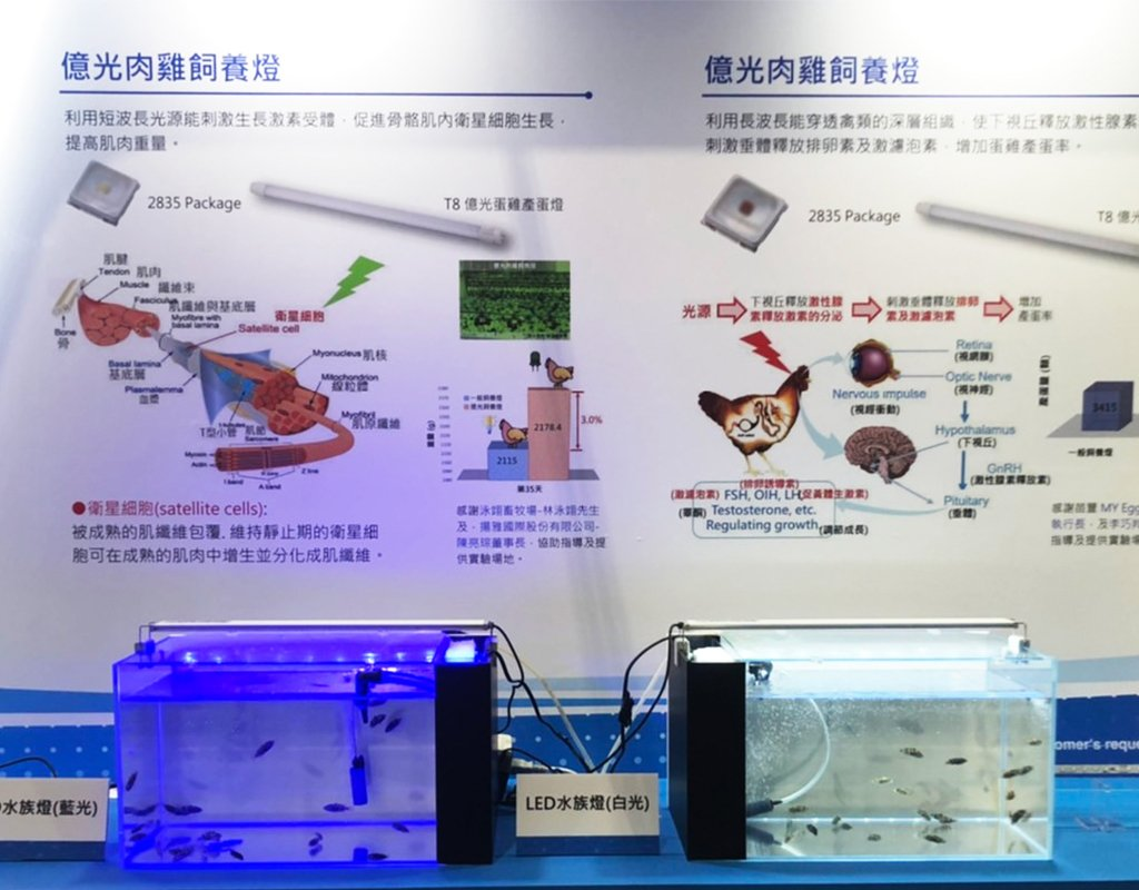 New hope for grouper fingerlings! Everlight Electronics and the National Taiwan University's team have developed LED lamps especially for groupers!
